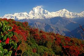 Annapurna7